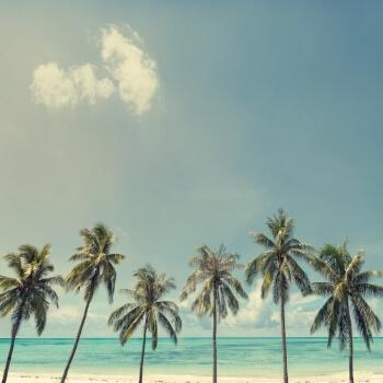 ヤシの木と海と空