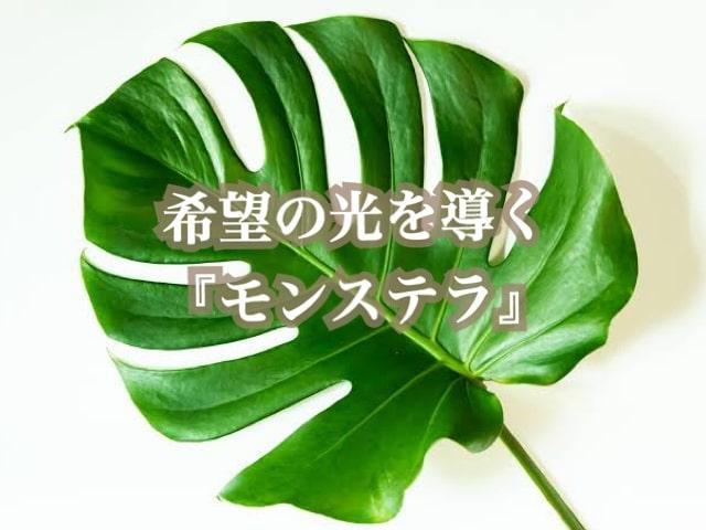 『モンステラ』の素敵な花言葉と育て方|ハワイアンジュエリーでいつも身近に